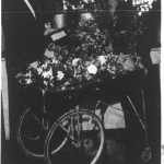 Robert Redmond of 9 West Maple Street, the White House's head florist and gardener, 1948